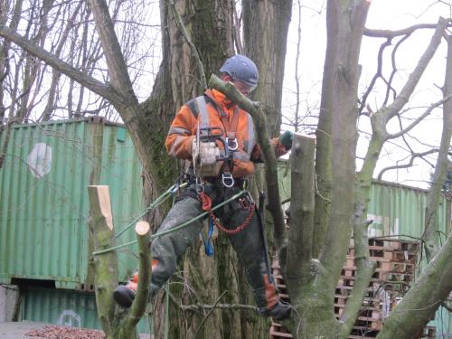 Baumpflege-und fällung durch Seilklettertechnik